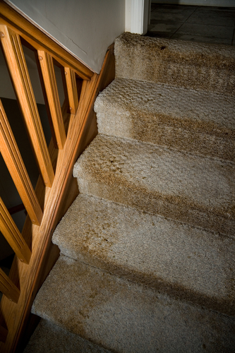 Mold Removal on stairs